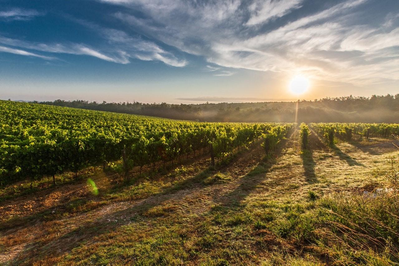 Tenuta Ulisse – Dietro ad un grande vino c'è  un Grande Territorio